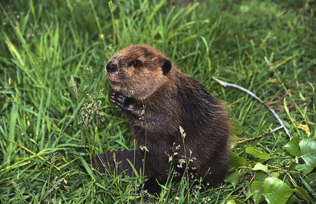 Free Beaver Inspection and more!