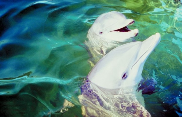 Hippie Couple to have Dolphin Baby