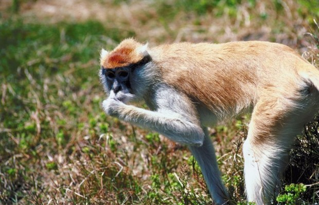 Sometimes you have to lick a monkey's butt
