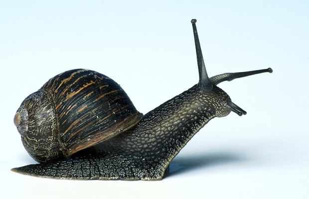 "Japan now offering the ""Live Snail"" Treatment"