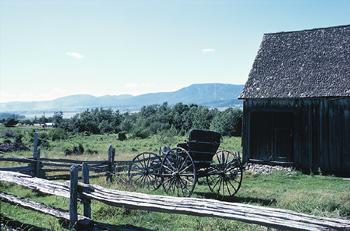 Horse Killed in an Amish Drive-By Shooting