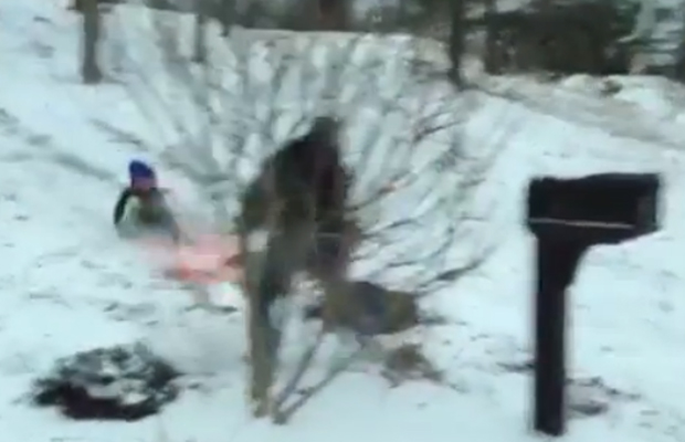 Video: Fail! Dad Catching Son Sledding