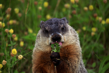 News – Super Groundhogs Bowl Day