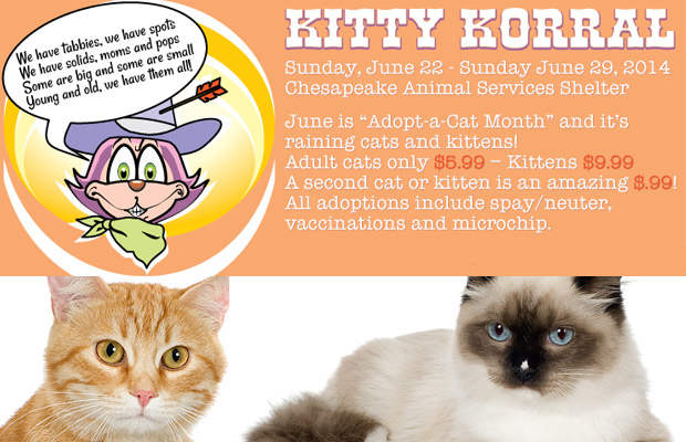 Chesapeake Animal Services – Kitty Korral